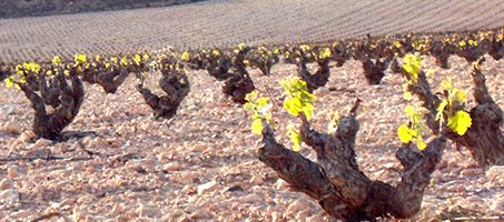 Wines and Vineyards DOP Jumilla